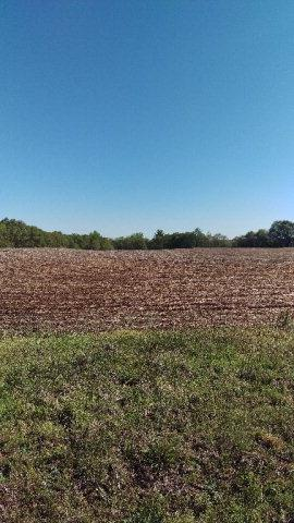 35+/-acres.  Flat and farmed now.